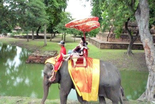 象の背中。
