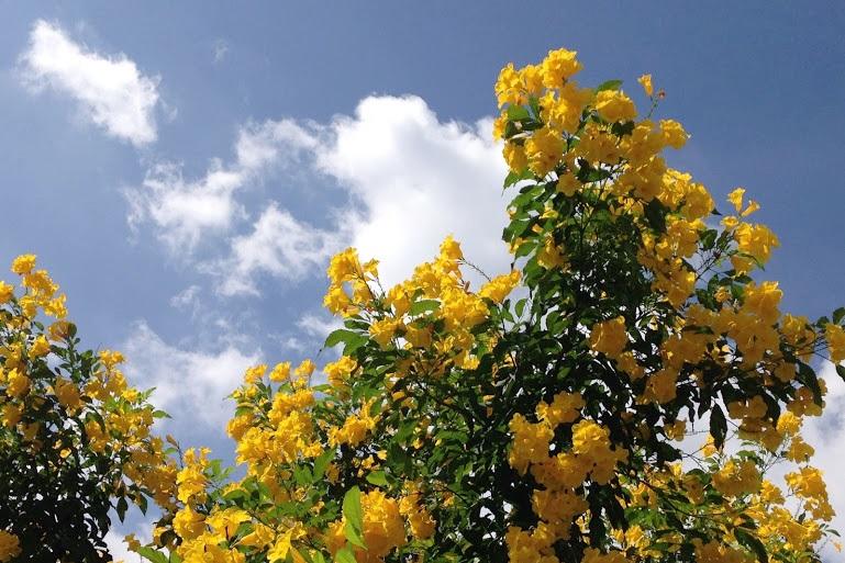 バンコクの花。