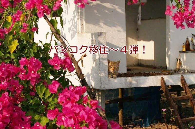 タイの野良猫