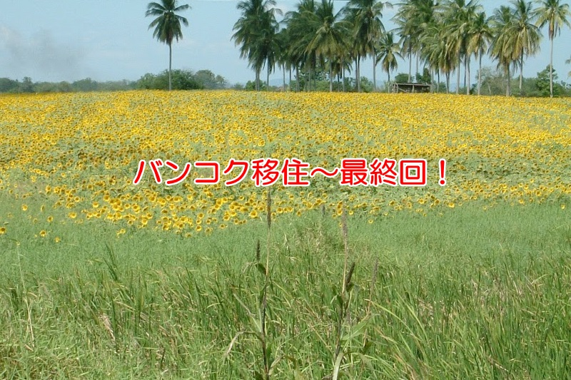 タイのひまわり畑