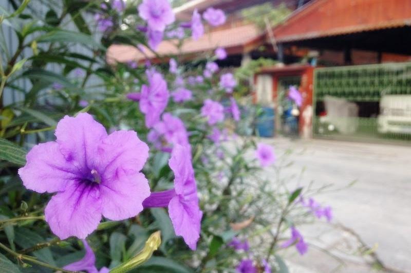 タイの紫の花。