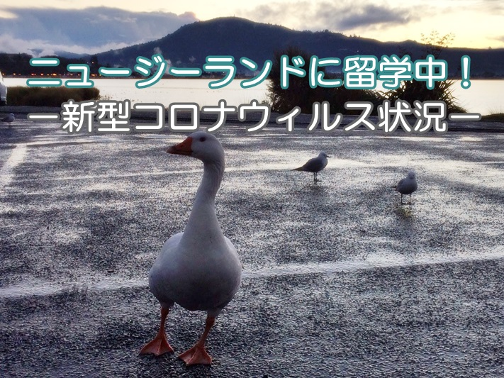 ニュージーランドの湖と鳥。